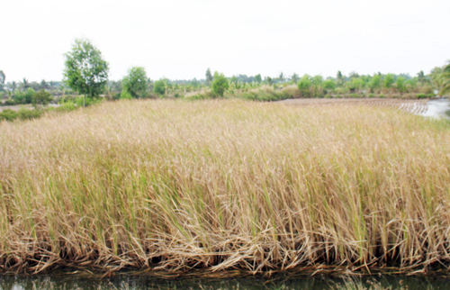 mekong-delta-ravaged-by-drought-and-salinity