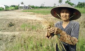 Drought grips Mekong Delta