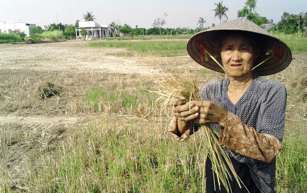 worst-drought-and-salinity-to-threaten-rice-supply-of-the-world-1