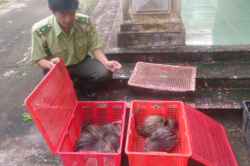 human-and-animals-victims-of-wild-meat-trade
