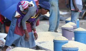 Zimbabwean 'wizard' bewitches a bumper crop