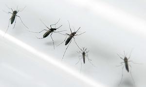 Australian contracts Zika virus after trip to Vietnam