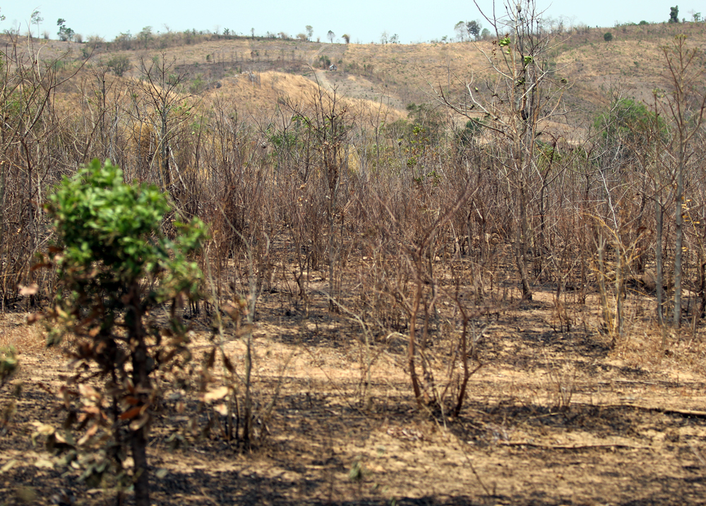 Central Highlands suffering under historic drought