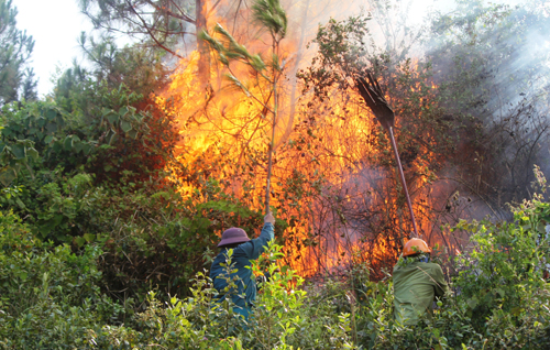 forests-on-high-fire-alert-in-tourist-hotspot-phu-quoc