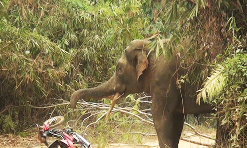 Rampaging elephant forces tens of villagers run for their lives in Dong Nai