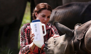 British royals Will and Kate tour rhino sanctuary in India