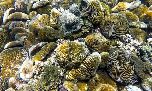 Kingdom of coral lies beneath Vinh Hy Bay