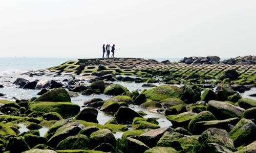Lurid green moss carpets sea defenses