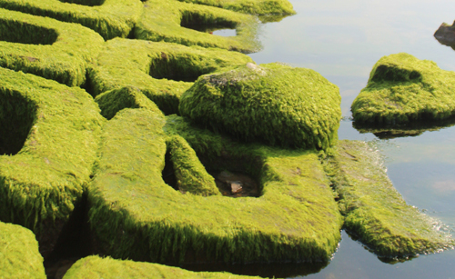 fantastic-sight-at-moss-sheathed-embankment-1