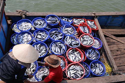 Consumers shy away from seafood despite diving prices