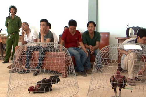 police-seize-billions-of-vnd-at-illegal-cock-fighting-event