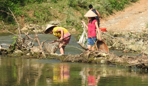 freshwater-fish-found-dead-in-thanh-hoa-river-1