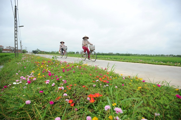 There are 3 kilometers of flowers lining the roads in Nam Dinh province.