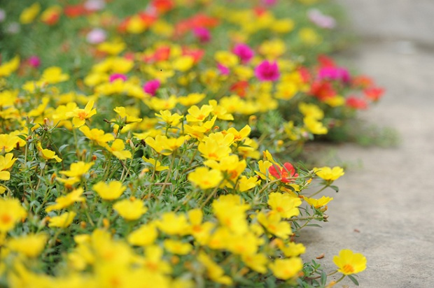 flowers-brighten-up-dull-countryside-street-6