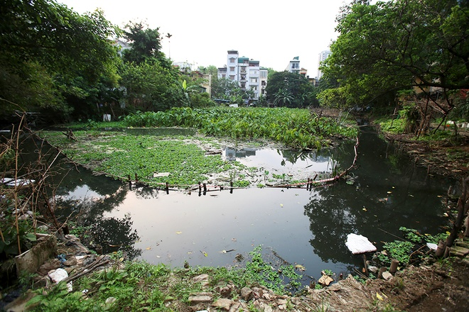 hanois-lakes-blighted-by-serious-pollution-7