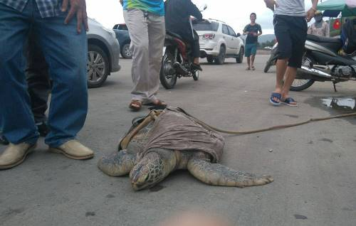 endangered-sea-turtle-rescued-after-street-auction