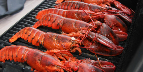 lobster-guide-claws-converge-on-five-islands-3