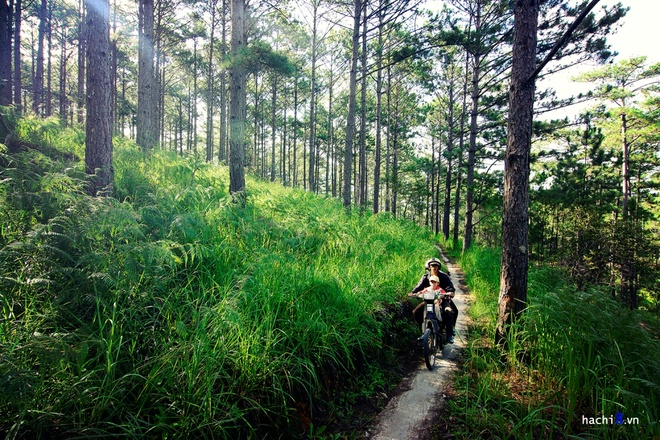 da-lat-6-tranquil-picturesque-places-that-help-you-hide-from-the-world-2