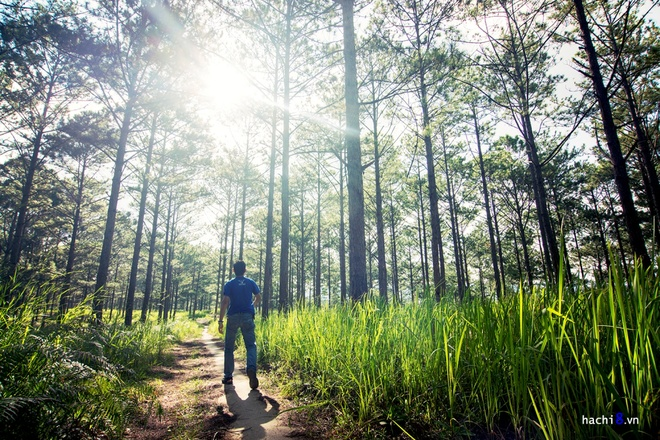 da-lat-6-tranquil-picturesque-places-that-help-you-hide-from-the-world-3