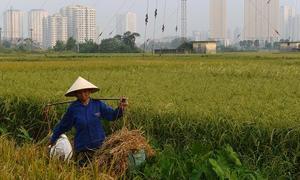 CIA delves into Vietnam's economy