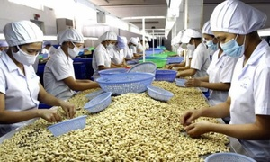 Vietnam hopes to cash in on cashew exports to the U.S. after Obama visit