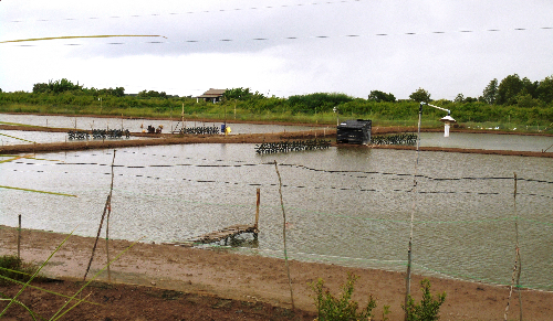 shrimp-farmers-going-broke-due-to-severe-drought