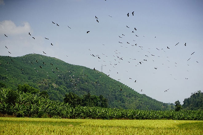 endangered-birds-make-surprise-touchdown-in-lao-cai-2