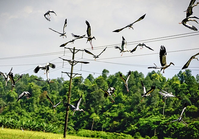 endangered-birds-make-surprise-touchdown-in-lao-cai-3