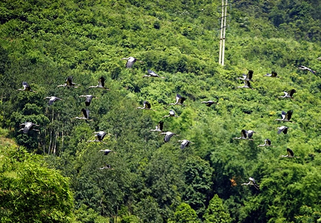 endangered-birds-make-surprise-touchdown-in-lao-cai-5