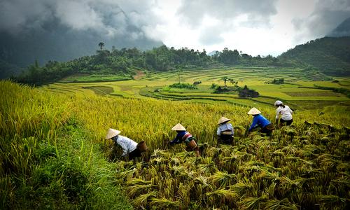 Vietnam targets 6.8 percent GDP growth next year