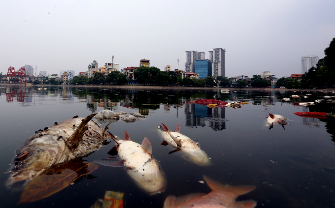 hanoi-lake-latest-to-of-dead-fish-assive-dead-fish-stay-afloat-in-hanoi-lake-2