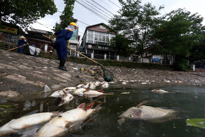 hanoi-lake-latest-to-of-dead-fish-assive-dead-fish-stay-afloat-in-hanoi-lake-6