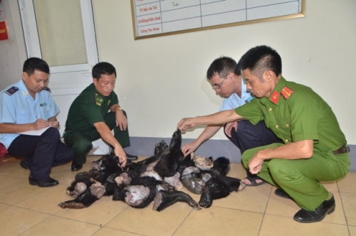 police-seize-bear-paws-in-northern-vietnam-1