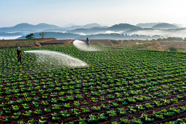 Only one percent of foreign direct investment is flowing into Vietnam's agricultural sector, according to the Institute of Policy and Strategy for Agriculture and Rural Development (IPSARD). Photo by VnExpress Photo Contest/Pham Phuoc