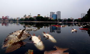 Vietnam will criminalize heavy polluters following mass fish deaths: PM