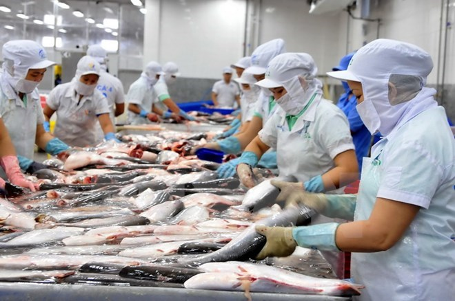 Catfish, one of the products Vietnam exports to Thailand. Photo by Vietnam News Agency/Vu Sinh