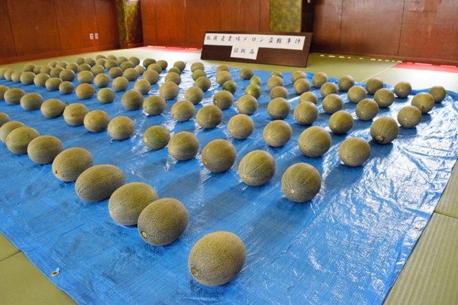japan-arrests-vietnamese-men-for-stealing-too-green-to-eat-melons