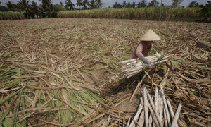 Drought holds back Vietnam's economic growth in Q2 2016