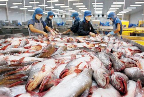 Vietnamese catfish. Photo by VnExpress/MH