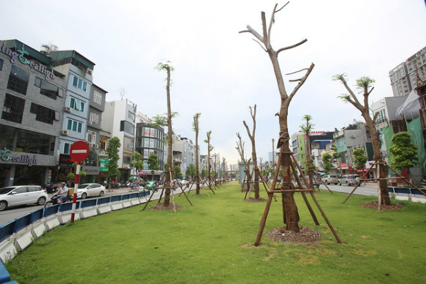 hanois-million-tree-planting-project-ed