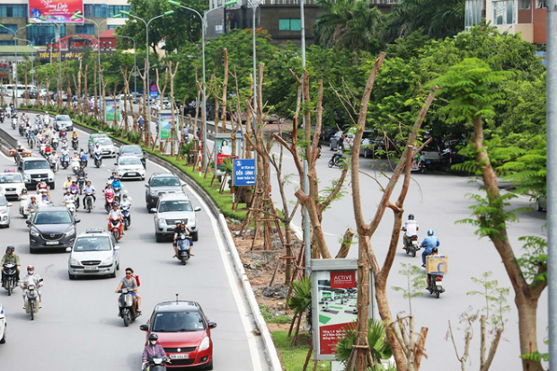 hanois-million-tree-planting-project-ed-1