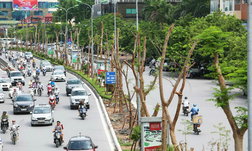 One million 'flamboyant' trees to brighten up Hanoi