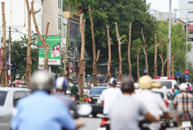 hanois-million-tree-planting-project-ed-2