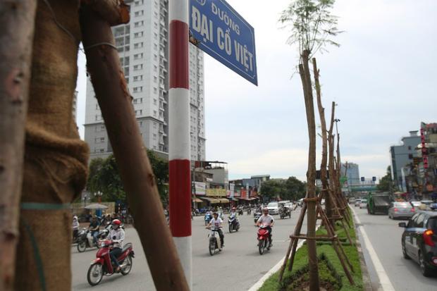 hanois-million-tree-planting-project-ed-3