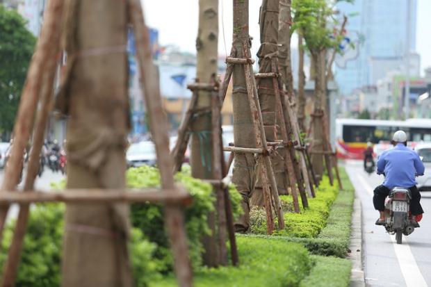 hanois-million-tree-planting-project-ed-4