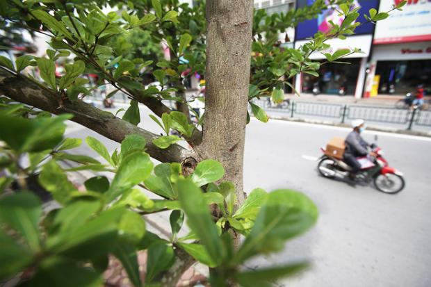 hanois-million-tree-planting-project-ed-6