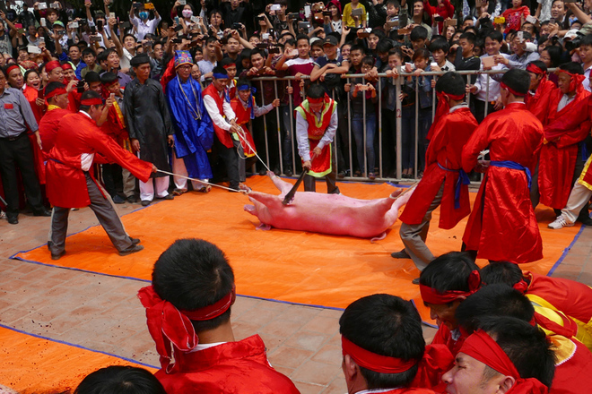 festivals-in-vietnam-not-for-the-faint-hearted-1