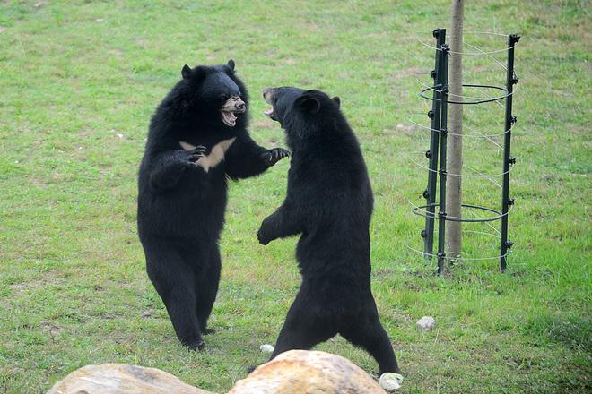 vietnam-police-seize-40-kilos-of-bear-paws-on-lao-coach-2