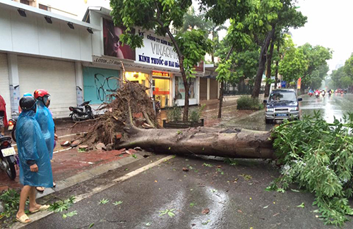 fallen-trees-scatter-on-the-streets-asmirinae-roll-through-hanoi