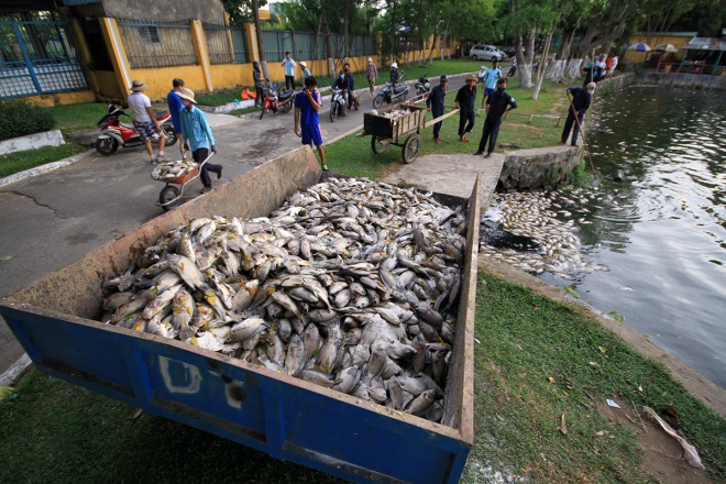 suspect-sewage-pipes-to-blame-for-da-nang-fish-genocide-7